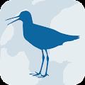 Wadvogels download