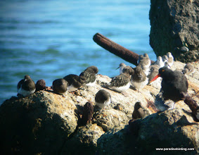 """Photo: """"Rock-pipers"""" at Coyote Point, San Mateo County"""