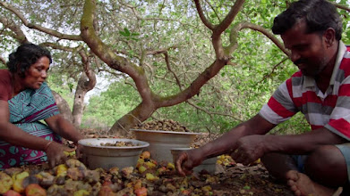 Photo: Published by USAID  This video tells the story of a husband and wife team in India working on a USAID-sponsored cashew processing project that not only provides economic opportunities for women, but encourages men to be involved in all aspects of family life to promote gender equality.  https://www.youtube.com/watch?v=UQnOTwve8hQ