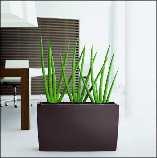 big indoor plant hire for office