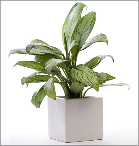 office plants hire service