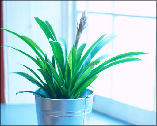 best indoor house plants air