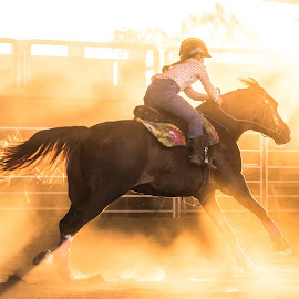 The Afternoon Dust Cloud by Sarah Sullivan - Sports & Fitness Other Sports ( barrel racing, afternoon glow, dust, action photography, sarah sullivan photography )