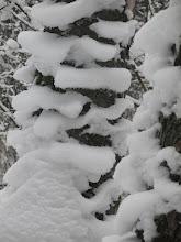 """Photo: Чтобы не замерзнуть, деревья одели """"пуховики"""""""