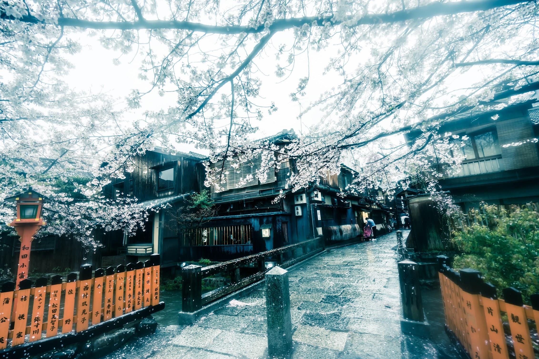 京都 祇園 桜3