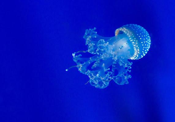 Medusa di Atum-Pietro