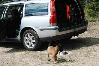Foto: Volvon ser gigantisk ut ;-)