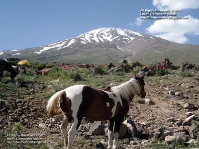 Damavand Horse