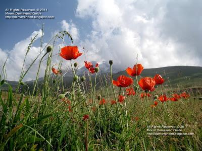 Mt Sabalan nature in spring