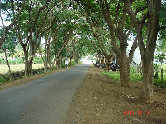 Gajanur tree lined avenue