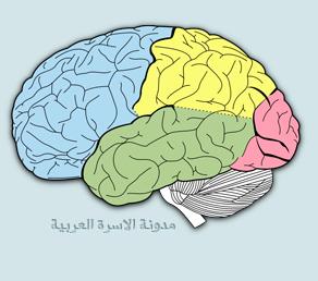مخ الانسان حقائق و غرائب