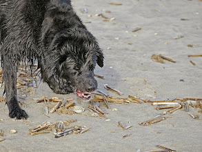 Photo: Muschelkalk ist auch gesund und lecker