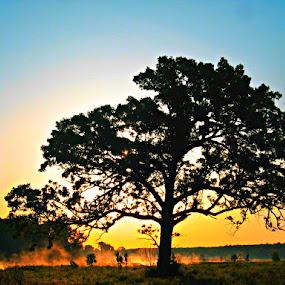Tree at dawn by Karen Carnahan - Landscapes Prairies, Meadows & Fields