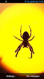 Pavouk Živá Tapeta - náhled