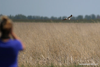 Photo: Pit stop on the way back to Novosibirsk while we watch black terns fly between lakes