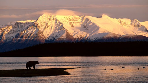 Alaskan Brown Bear Silhouetted Against Mount Katolinat, Alaska.jpg