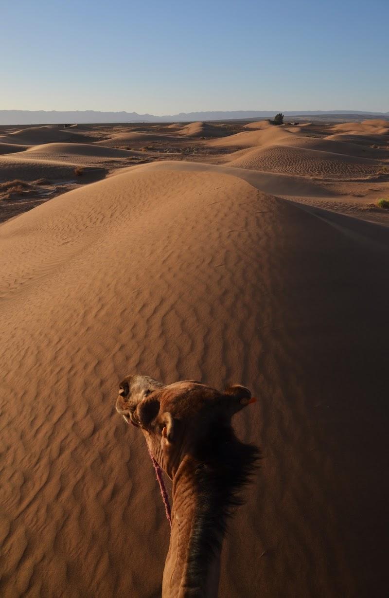 A dorso di cammello di Migliu