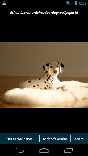 玩個人化App|Dalmatian Dog Wallpapers免費|APP試玩