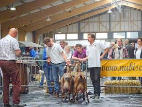 Photo: Rubriek 2: Nubische geiten geboren in 2015. 1a. Ilaria van Oudwoude; 1b. Ilonka van Stal Suijden.