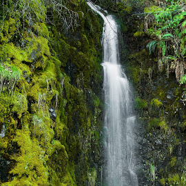 Waterfall and moss by John Rourke - Landscapes Waterscapes ( 2019, usa, u.s.a., sierra nevada, winter, california, ca, landscape )
