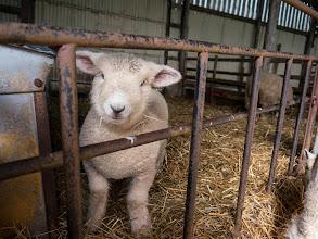 Photo: URSA behind bars....