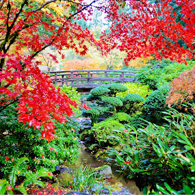 Fall colors at Japanese gardens by John Broughton - Nature Up Close Trees & Bushes ( fall leaves, japanese garden, fall colors, moon bridge, traditional japanese garden )