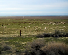 Photo: Sheep farm views off of I-5 in SoCal