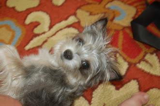 Photo: April 22: Cute Dog