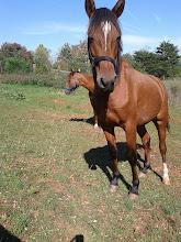 Photo: Horse 3