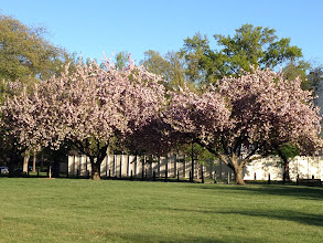 Photo: Spring blossoms in Washington DC