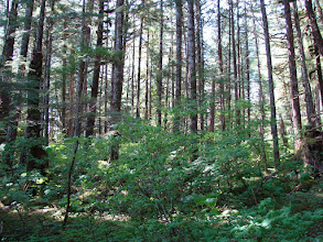 Photo: The woods behind my campsite.