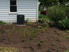 Photo: Our first 2015 rain garden is in the ground! Here is an after photo!