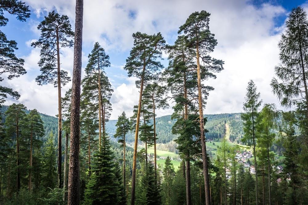 Die Aussicht vom Heidelbeerweg auf das Heidelbeerdorf Enzklösterle
