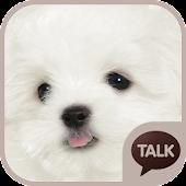 하얀 강아지 (마르티스) 카톡테마