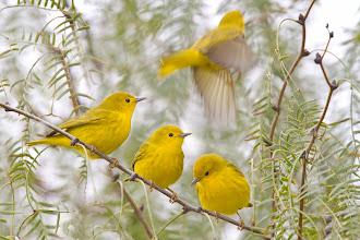 Photo: Yellow Minus One