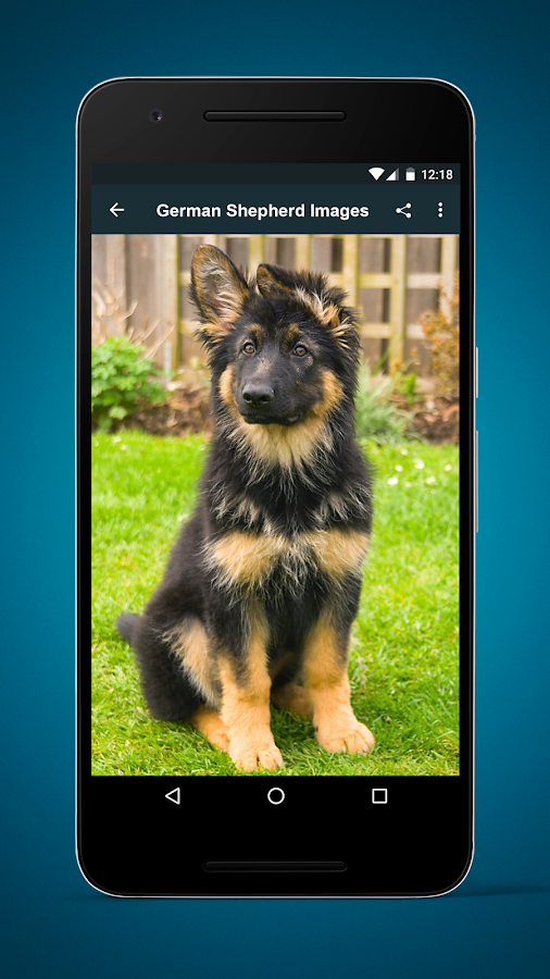 German Shepherd Dog Images- screenshot