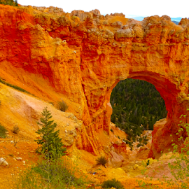 Bryce Canyon - Natural Bridge by Jane Spencer - Landscapes Caves & Formations ( national park, erosion, arizona, natural bridge, bryce canyon )