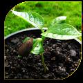 Seeds - Planting (Guide) APK