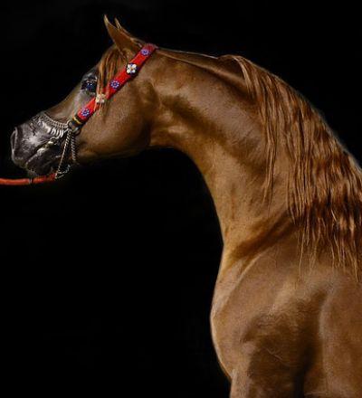 Horses Muddle Puzzle