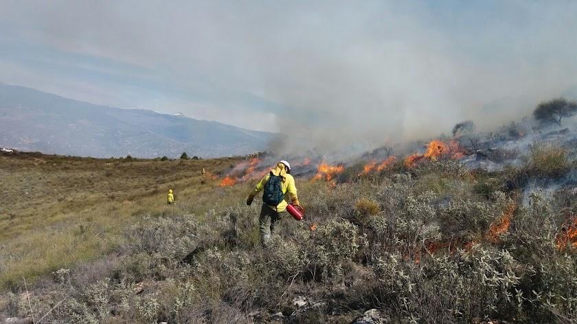 Fuego y pastoreo para cuidar el monte
