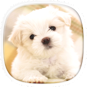 Cute Puppy Wallpapers: Cutest Pictures of Puppies