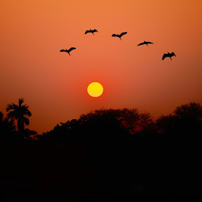 Returning Home by Soham Banerjee - Landscapes Sunsets & Sunrises ( nature, silhouette, sunset, birds,  )