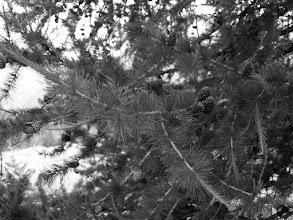 Photo: Nature