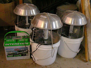 Photo: Portable blacklight bucket traps with deep cycle marine battery.