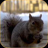 Squirrel 3D Video Wallpaper
