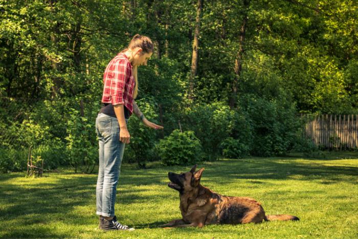 Como Ensinar o Cachorro a Deitar 3