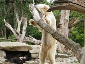 Photo: Knut inspiziert den Baumstamm ;-)