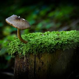 cottage and roof by Dainius Karaliūnas - Nature Up Close Mushrooms & Fungi ( mushroom, stump )