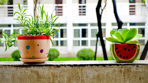 遊戲必備免費app推薦|室內植物裝飾手機線上免付費app下載|3C達人阿輝的APP