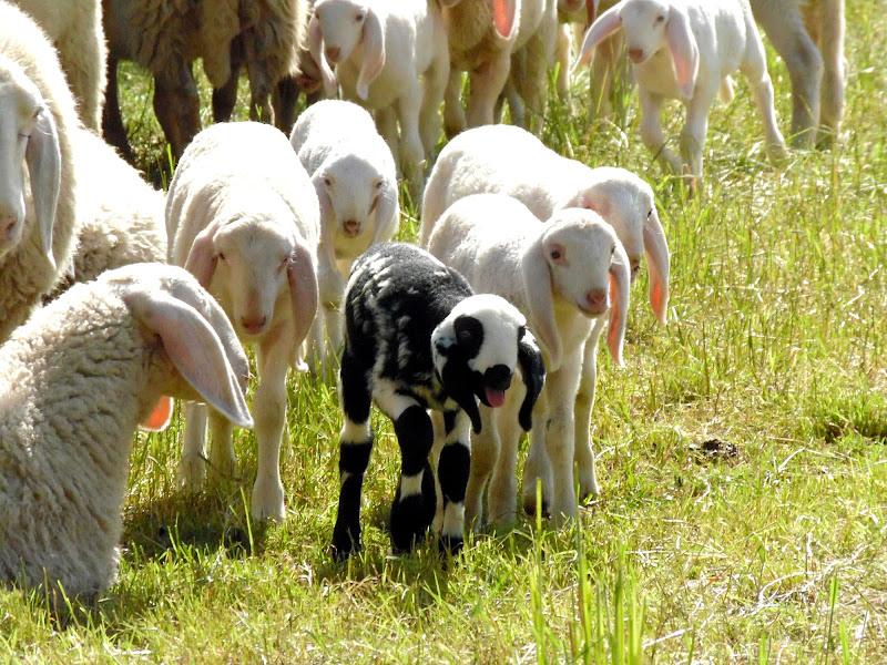 La pecora nera della famiglia di supergigi